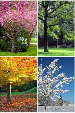 Four Seasons Collage: Spring, Summer, Autumn, Winter by Hannamariah