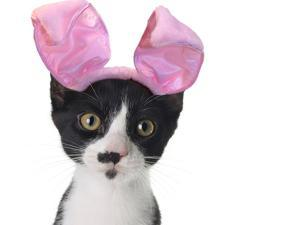 Funny Black and White Kitten Wearing Pink Easter Bunny Ears by Hannamariah