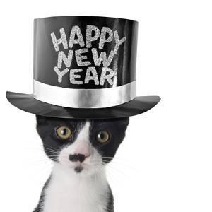 Funny Kitten Wearing a Happy New Year Hat by Hannamariah