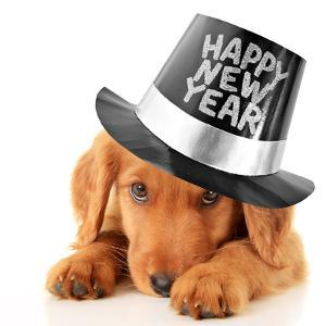 Shy Puppy Wearing a Happy New Year Top Hat by Hannamariah