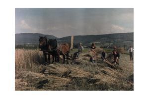 Farmers Cut Grain on the Swabian Alb by Hans Hildenbrand