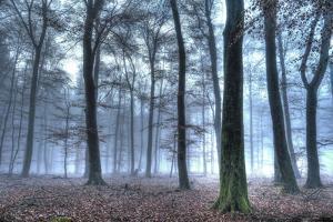 Autumnal forest, Rhineland-Palatinate (Rheinland-Pfalz), Germany, Europe by Hans-Peter Merten