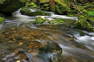 Forest brook, Schiessendumpel, Mullerthal, Luxembourg, Europe by Hans-Peter Merten