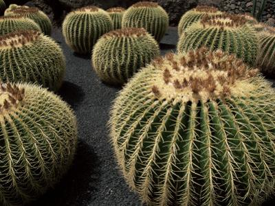 Jardin De Cactus Near Guatiza, Lanzarote, Canary Islands, Spain by Hans Peter Merten