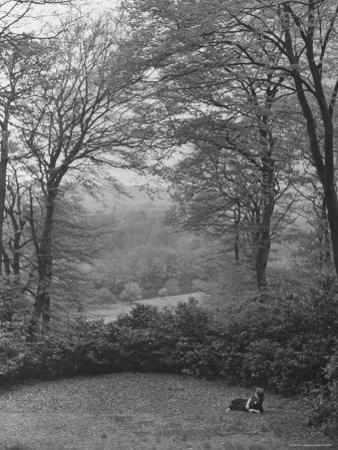 Wooded Area on Cliveden, Estate Owned by Lord William Waldorf Astor and Wife Lady Nancy Astor by Hans Wild