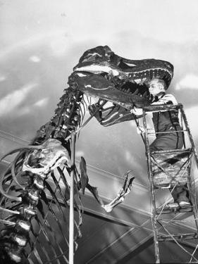 Man Working on Skeleton of a Tyrannosaurus at the American Museum of Natural History by Hansel Mieth