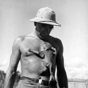 Rhesus Monkey Climbing on a Man's Chest at a Monkey Colony by Hansel Mieth