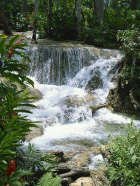 Dunns River Falls, Ocho Rios, Jamaica, West Indies, Caribbean, Central America by Harding Robert