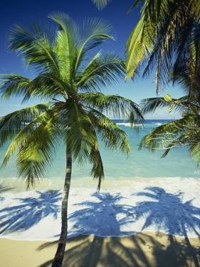 Palm Trees on Tropical Beach, Dominican Republic, West Indies, Caribbean, Central America by Harding Robert