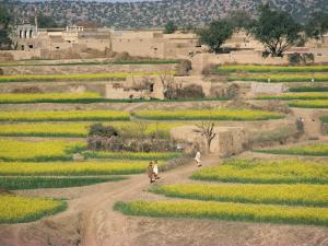 Village Near Rawalpindi, Pakistan by Harding Robert