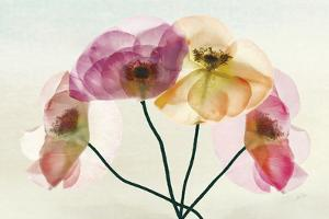 Translucence by Harold Davis