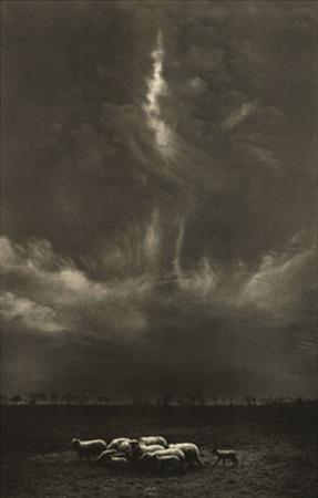Sheep Under Cloud by Harold Feinstein