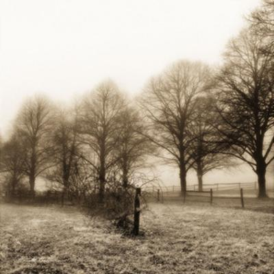 Fence Row and Trees