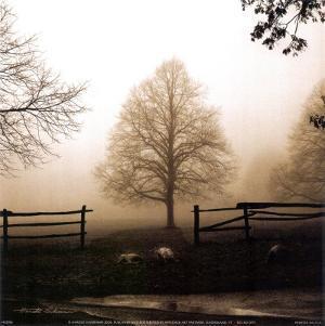 Morning Texture by Harold Silverman