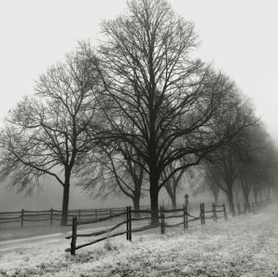 Row of Trees (b/w)