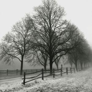 Row of Trees (b/w) by Harold Silverman