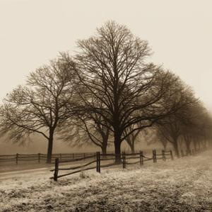 Row of Trees by Harold Silverman
