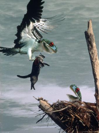 Bird with Lizard Head and Prey