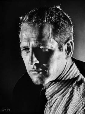 Paul Newman Portrait in Stripes Polo by Harper