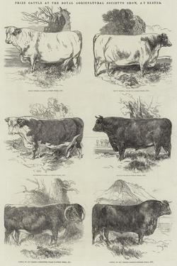 Prize Cattle at the Royal Agricultural Society's Show, at Exeter by Harrison William Weir