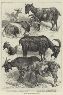 The Goat Show at the Crystal Palace by Harrison William Weir
