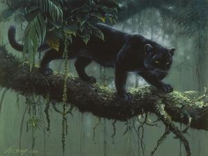Black Jaguar by Harro Maass