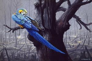 Blue and Yellow Macaw in Burned Forest by Harro Maass