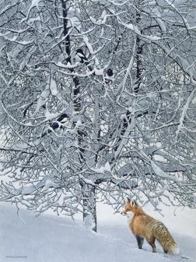 Fox in Snow by Harro Maass