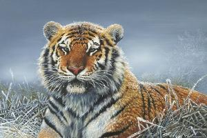 Tiger in Snow by Harro Maass