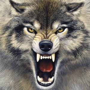 Wolf by Harro Maass