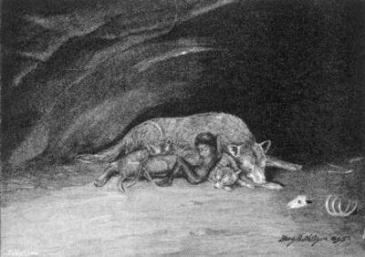 Wolf Adopting Human Child 2 of 5