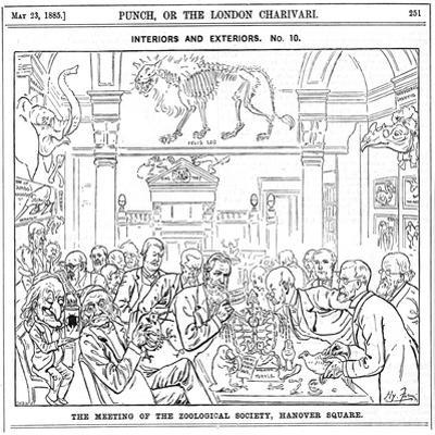 The Meeting of the (Roya) Zoological Society, Hanover Square, London, 1885