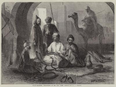 Snake-Charmers, Inhabitants of the Riff Coast, Morocco