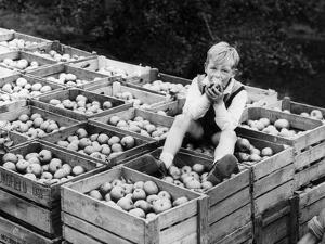Apple Eater by Harry Shepherd