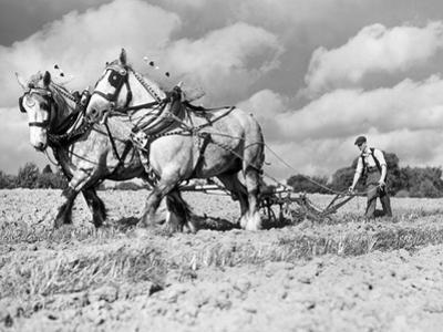 Ploughing Competition by Harry Todd
