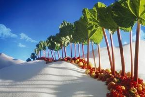 Avenue of Rhubarb Sticks and Fruit in a Sugar Desert by Hartmut Seehuber
