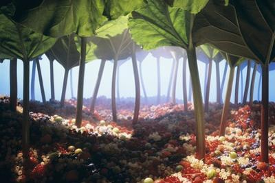 Rhubarb Forest with a Berry Floor by Hartmut Seehuber