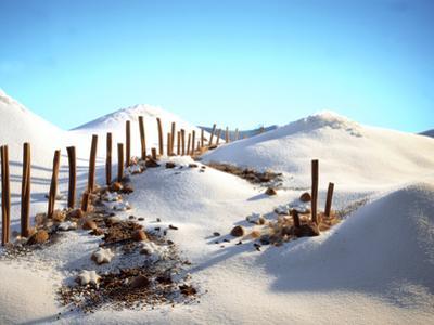 Still Life with Cinnamon Sticks, Nuts, in Sugar Desert