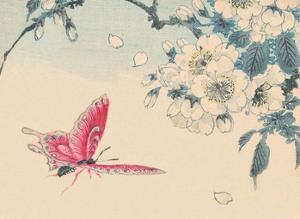 Japanese Pink Butterfly by Haruna Kinzan