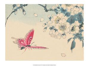 Japanese Pink Butterfly by Haruna Kinzan
