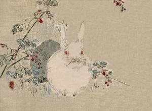 Japanese Rabbit by Haruna Kinzan