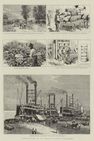 Harvest-Time on an American Cotton Plantation