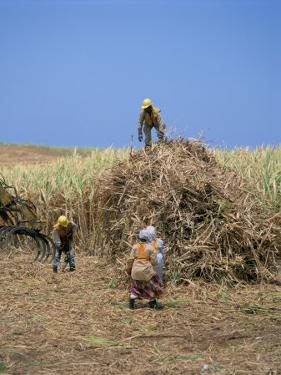 Harvesting Sugar Cane, Mauritius, Indian Ocean, Africa by G Richardson
