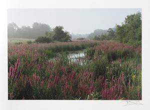 Meadow by Harvey Edwards