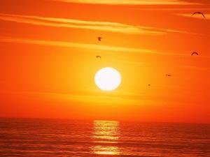 Birds Flying at Sunset, Playa Del Rey, CA by Harvey Schwartz