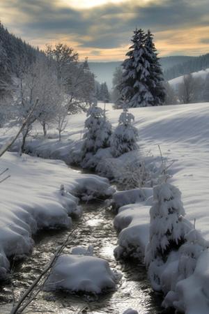 Winter by Hasenonkel