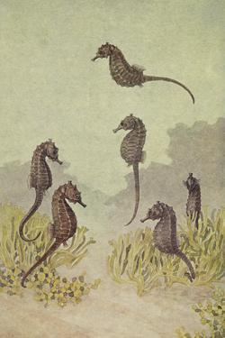 A Painting of Several Seahorses Swimming around Seaweed by Hashime Murayama