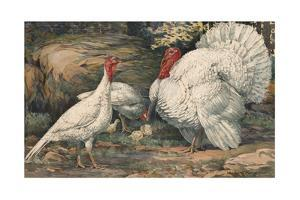 A Painting of White Holland Turkeys and their Chicks by Hashime Murayama