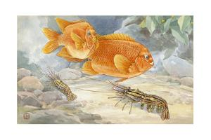 A Pair of Garibaldi Fish Swim Above Prawns on the Ocean Floor by Hashime Murayama