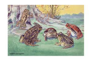 A Variety of Frogs Congregate at the Roots of a Tree Stump by Hashime Murayama